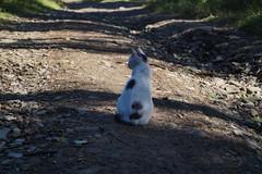 (pelargoni) Tags: poiuytrewq 2018 beskidżywiecki kot slanavoda