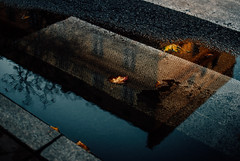 Your roots are showing (ewitsoe) Tags: 35mm autumn city cityscape fall nikond80 street warszawa erikwitsoe erikwitsoecom poland urban warsaw puddle reflection cityurban water atmosphere morning early walk crosswalk building lines leave