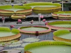Xx_P1050076 (Menny Borovski) Tags: bronx botanicalgarden newyork bigfave