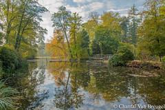 Herfst in Nederland (Chantal van Breugel) Tags: herfst landschap reflecties dinkelland twente overijssel oktober 2018 canon5dmark111 canon24105