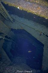 IMG_1378 (davide.clementelli) Tags: diving dive dives padi immersione immersioni ampportofino portofino liguria friends amici underwater underwaterlife sottacqua