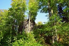 Zamek Szczerba (JoannaRB2009) Tags: zamekszczerba zamek castle building architecture ruins green nature tree trees beech summer sunny lowersilesia dolnyśląsk polska poland