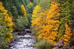 Molalla River in autumn (BLMOregon) Tags: blm bureauoflandmanagement molalla river landscape recreation hiking corridor autumn fall trees color