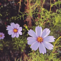 make my life perfection (quepasaboy) Tags: dreams flowers happysad nostalgic imissthegoodtimes mygarden garden flower green purple allalone