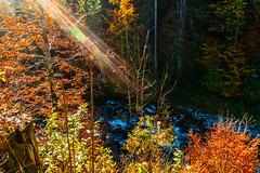 Lens Flare in Autumn (*Capture the Moment*) Tags: 2018 autumn bach blätter elemente herbst kleinwalsertal leafes pflanzen riezlern river sonya6300 sonyalpha6300 sonye1018mmf4oss sonye1018mmoss sonyilce6300 wasser water