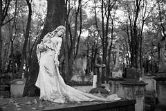 autumn in the capital-Warsaw/Poland (summer_57) Tags: graveyard grave cmentarzpowązkowski cemetery autumn warsaw warszawa warschau nikond750 sigma35mm14