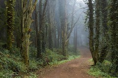 ... (jorgeverdasca) Tags: pathway goth trees 5dmk4 canon morningfog foggy mist fog forest woodland sintra portugal