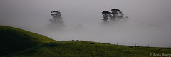 Soupy (rossmberry) Tags: newzealand hawkesbay fog trees weather panorama rural farm