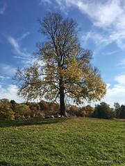 Schafe unterm Baum (Sockenhummel) Tags: baum tree park garten herbst britzergarten grünberlin