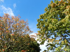 Under the trees in Torry, Aberdeen, Sep 2018 (allanmaciver) Tags: through trees under leaves fall autumn weather blue sky clouds stand admre torry aberdeen north east coast scotland allanmaciver