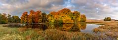 Autumn at Longshaw (Peter Quinn1) Tags: beech longshawestate duckpond derbyshire nationaltrust autumn autumnalcolours higgertor woodland