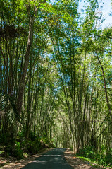 Bambú (faltimiras) Tags: indonesia kalimantan borneo flores komodo orangutan monkey kutai maratua derawan beach platja paradise sunset sunrise pulau padar