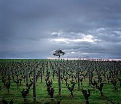 Gralyn Estate (JChipchase) Tags: cloud sunset winery vineyard gralyn nikon d750