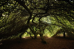 Flickr_Foresta_Demaniale_Verzy_09-2018_IMG_2051 (Roberto Bombardieri) Tags: francia france verzy foresta forêt alberi forest