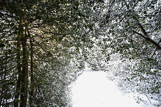 Scene from a Wintry woodland walk  -  (Selected by GETTY IMAGES)