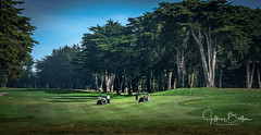 Seniors Golf at Blackhorse (Jeffrey Balfus (thx for 3 Million views)) Tags: monterey sonyilce6300 sony6300 sonyalpha mirrorless sonyemount sel100400g