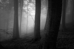Deep in the forest IX (ilias varelas) Tags: fog forest blackandwhite bw nature mood monochrome mono mist light landscape atmosphere woods trees greece varelas