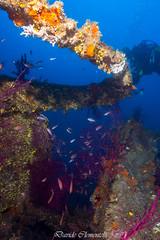 IMG_1392 (davide.clementelli) Tags: diving dive dives padi immersione immersioni ampportofino portofino liguria friends amici underwater underwaterlife sottacqua