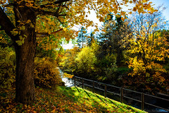 October colours (Joni Mansikka) Tags: autumn nature outdoor trees leaves foliages stream green grass rural forest paimio suomi finland