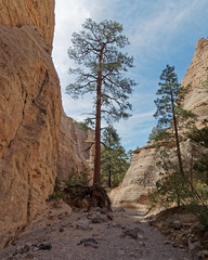 Looking Back to the Entrance (Whidbey LVR) Tags: lyle rains lylerains em5ii tent newmexico olympus kashakatuwe rocks national monument desert geology painted cliff slot canyon hoodoo