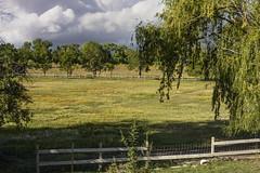 Los Luceros Ranch Pasture (Tom Kilroy) Tags: losluceros ranch alcalde newmexico nature tree ruralscene landscape grass outdoors fence scenics farm summer greencolor agriculture field meadow sky nopeople beautyinnature nonurbanscene pasture
