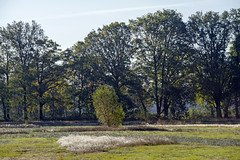 _IMG2493 (Henk de Regt) Tags: the netherlands gelderland natuur nature landscape grass bos forest trees zonsopkomst sunset sundown zonsondergang swamp nederland veluwe landschap gras water bomen moeras
