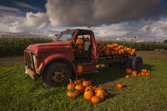Pumpkin Patch with old flat bed truck (Jim Corwin's PhotoStream) Tags: agriculture americanflag halloween october oldtruck pacificnorthwest afternoon antique autumn carry carrying cornfield countryside customs fall fallcolors farm farming field flatbed fullofpumpkins gourd group harvest holiday horizontal jackolanterns largegroup localattractions mothernature mud muddy oldtruckbrokendowntruck outdoors pastoral photography pick picking plant pumpkin pumpkins rows rural ruralscene scenic seasonal stormyweather tourism tradition travel