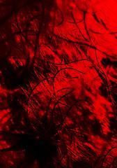 Lichtspiel 2 (schubertj73) Tags: x10 fujifilm gimp fotografie foto fotos fotograf focus out scharf unscharf photo photography photos photographer photoart photographien art artwork artworks artphoto artphotography artphotographer artist kunst kunstwerk kunstfotografie kunstfotograf künstler schubertj73 monochrome monocromo naturfotografie natur nature naturephoto naturephotography