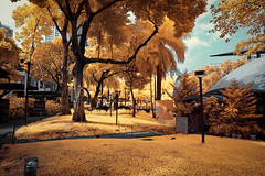 Greenbelt Park, Makati City, Philippines (Infrared Photography- False Colors) ​ (jc reyes) Tags: travels ir infrared infraredmaster digitalinfrared infraredimages infraredworld infraredphoto irfilter irphotography colorinfrared falsecolors invisiblelight creativeir creativeiramericas creativeireurope iginfrared photography infraredcamera infraredlandscape kolarivision jawdroppingshots epiccaptures igworld nikon nikonphotography nikkor park greenbelt manila ​