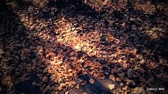 IMG_20181017_123058 (Željko V. Mitić) Tags: autumn autumnal autumnleaf autumnleaves autumncolors leaf leaves fallenleaf fallenleaves color colors fall nature naturephotography tree trees light sunlight shadow shadows shade sunny sunnyday outdoors pond sun october indiansummer melancholy melancholic loneliness lonely lonesome serene peaceful calm still stillness peace