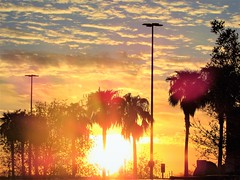 Big sunset (thomasgorman1) Tags: canon desert sun fireball sunset orange trees palmtrees sky clouds nature az arizona scenic