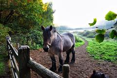 Waiting at the gate (HDR). (wimjee) Tags: nikond7200 nikon d7200 afsdx1680mmf284eedvr herfst autumn ochtend morgen paard horse hdr highdynamicrange hdrefexpro2 niksoftware