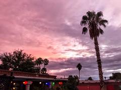 Monsoon 💦☔️Dawn 🌅 Clouds ☁️Aglow (Chic Bee) Tags: poolside poollights lights backyard iphone7plus dawn sky clouds monsoon tucson arizona southwesternusa americansouthwest walls