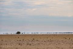 Drought (astrogirl969) Tags: fujifilm xe1 fujifilmxc50230mmf4567ois telephoto drought dry barren mirage clouds australia haze adobecameraraw acr pselements minimalist landscape tree brown blue 10faves 500views