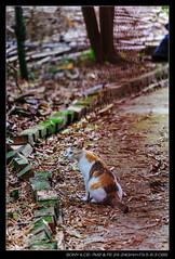 20180429-135514-A7M2 (YKevin1979) Tags: sony sonyfe24240mmf3563oss a7ii a7m2 ilce7m2 alpha 大嶼山 lantau lantauisland hongkong 香港 hiking 東澳古道 tungoancienttrail cat 貓