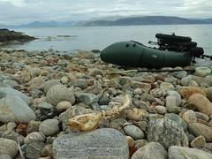 P1070583 (Yonna Bjorkkvist) Tags: roadsideshopping roadkill fatbike surly pugsley sweden sverige norge norway