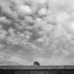 Katowice 2018 (Tomek Szczyrba) Tags: blackandwhite noiretblanc enblancoynegro inbiancoenero bw głowa head monochrome noir chmury niebo sky clouds ściana mur murek wall człowiek people girl dziewczyna street ulica miasto city town streetphoto fotografiauliczna streetphotography polska poland włosy hair minimal minimalizm minimalism czerń biel czerńibiel czarnobiałe