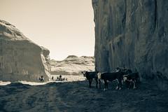 Monument Valley 2018 (Lú_) Tags: monumentvalley utah cattle tourism lightroom
