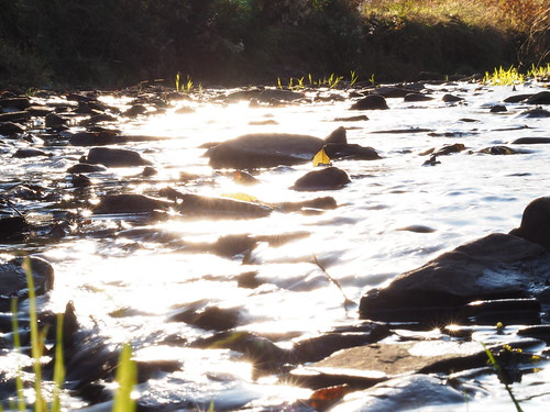 the light stream