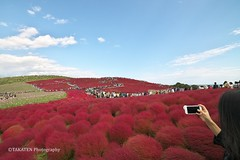 Red Kochia Carnival at Hitachi Seaside Park (_TAKATEN_) Tags: samyang sony alpha a7rii a7rm2 kochia