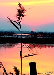 ___ particolare di un tramonto (erman_53fotoclik) Tags: tramonto sunset canna profilo particolare palo foglie pennacchio cielo acqua riflesso canon eos 500d erman53fotoclik