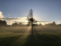"And God said ""Let there be light"" (firehouse.ie) Tags: beauty landscapes landscape planetearth sunrises amazing shadows shade light mistymorning mist sunlight sunup sunshine clouds sky morn morning misty frosty frost fog november1 seasons winter november 2018 ennis countyclare ireland countryside rural trees tree sunrise sun daybreak dawn nature"