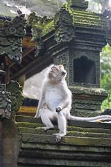 monkey at Ubud (prodo001) Tags: gianyar bali indonesien id ubud monkeyforest temple