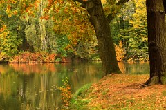 IMG_7893 Picture # 2 (MariuszWicik) Tags: park wood grass tree forest water lake autumn view image canoneos5dmarkii lens polska