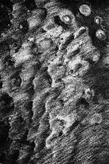 Sables_P7-4 (michelbarriere) Tags: aquitaine biscarrosse france sables localisation