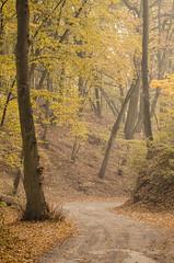 In the valley (konradpoland) Tags: autumn fall red forrest road trail tree nikon d7000 d7k nikkor 70210 70210mm f4 poland lublin polska węglinek droga jesień europe złota cokin graduated filter