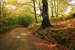Autumn Bend (captures.in.time) Tags: autumn fall woods scotland aberfeldy