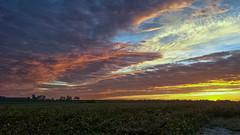 Colorful Sky - IMG_20181013_071618 (Glenn Anderson.) Tags: dawn sunrise clouds cloudsstormssunrisessunsets sky treeline landscape horizon pastels solarreflection mostlycloudynikon morning beanfield path