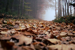 into the hollow (Ralaphotography) Tags: fog foggy morning autumn fall herbst season nebel landscape nature natur outdoor forest woods leaves foliage sleepy hollow