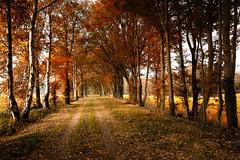 A walk in autum (radonracer) Tags: autumn allee niederrhein